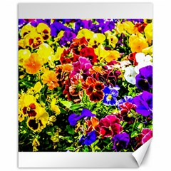 Viola Tricolor Flowers Canvas 16  X 20