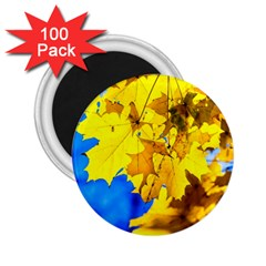 Yellow Maple Leaves 2 25  Magnets (100 Pack)
