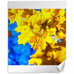 Yellow Maple Leaves Canvas 11  X 14
