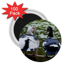 Muscovy Ducks At The Pond 2 25  Magnets (100 Pack)  by ImphavokImpressions