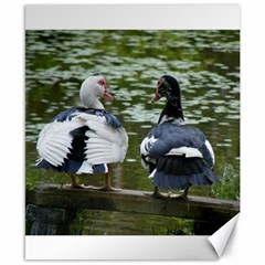 Muscovy Ducks At The Pond Canvas 8  X 10
