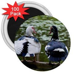 Muscovy Ducks At The Pond 3  Magnets (100 Pack) by ImphavokImpressions