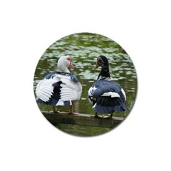 Muscovy Ducks At The Pond Magnet 3  (round) by ImphavokImpressions