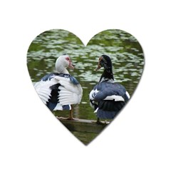 Muscovy Ducks At The Pond Heart Magnet