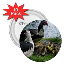 Muscovy Family 2 25  Buttons (10 Pack)