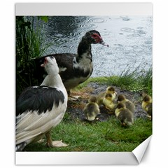 Muscovy Family Canvas 20  X 24