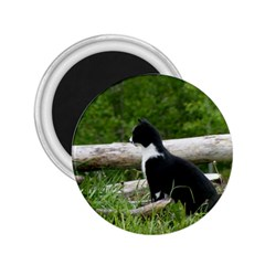 Farm Cat 2 25  Magnets by IIPhotographyAndDesigns