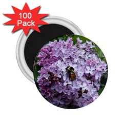 Lilac Bumble Bee 2 25  Magnets (100 Pack)