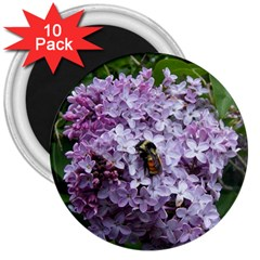 Lilac Bumble Bee 3  Magnets (10 Pack)