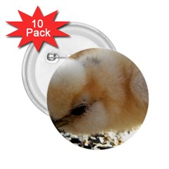 Silkie Chick  2 25  Buttons (10 Pack)