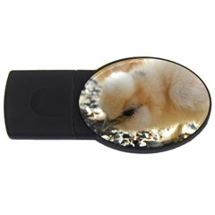 Silkie Chick  Usb Flash Drive Oval (2 Gb)
