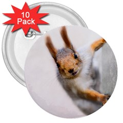 Curious Squirrel 3  Buttons (10 Pack)