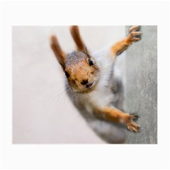 Curious Squirrel Small Glasses Cloth
