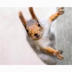 Curious Squirrel Canvas 8  X 10