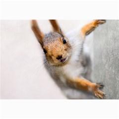 Curious Squirrel Canvas 20  X 30