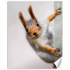 Curious Squirrel Canvas 11  X 14   by FunnyCow