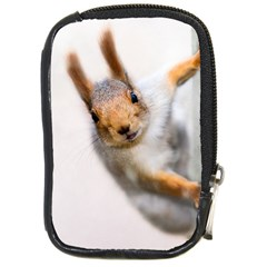 Curious Squirrel Compact Camera Cases by FunnyCow