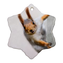 Curious Squirrel Ornament (snowflake)