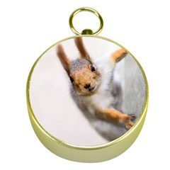 Curious Squirrel Gold Compasses by FunnyCow
