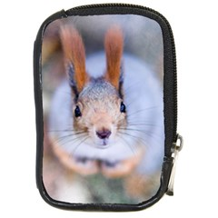 Squirrel Looks At You Compact Camera Cases by FunnyCow