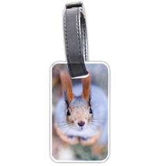 Squirrel Looks At You Luggage Tags (one Side)