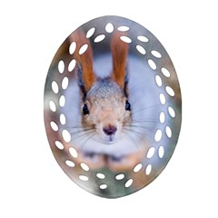 Squirrel Looks At You Oval Filigree Ornament (two Sides) by FunnyCow