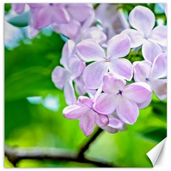 Elegant Pink Lilacs In Spring Canvas 20  X 20