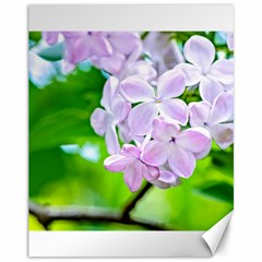 Elegant Pink Lilacs In Spring Canvas 11  X 14