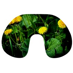 Yellow Dandelion Flowers In Spring Travel Neck Pillows