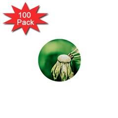 Dandelion Flower Green Chief 1  Mini Buttons (100 Pack)