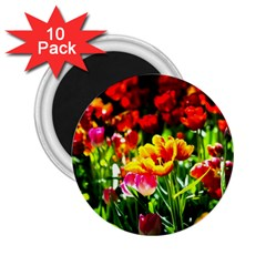 Colorful Tulips On A Sunny Day 2 25  Magnets (10 Pack)