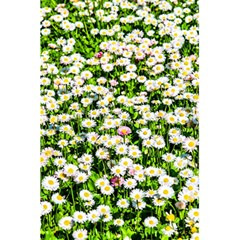 Green Field Of White Daisy Flowers 5 5  X 8 5  Notebooks