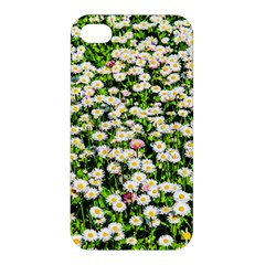 Green Field Of White Daisy Flowers Apple Iphone 4/4s Hardshell Case by FunnyCow