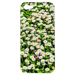 Green Field Of White Daisy Flowers Apple Iphone 5 Hardshell Case by FunnyCow