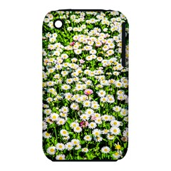 Green Field Of White Daisy Flowers Iphone 3s/3gs by FunnyCow