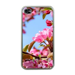 Crab Apple Blossoms Apple Iphone 4 Case (clear)