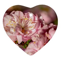 Beautiful Flowering Almond Heart Ornament (two Sides) by FunnyCow