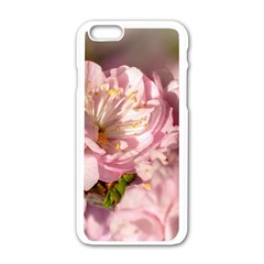 Beautiful Flowering Almond Apple Iphone 6/6s White Enamel Case by FunnyCow