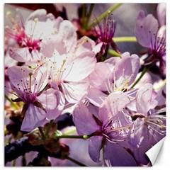 Sakura In The Shade Canvas 12  X 12