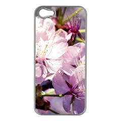 Sakura In The Shade Apple Iphone 5 Case (silver) by FunnyCow