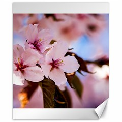 Three Sakura Flowers Canvas 16  X 20