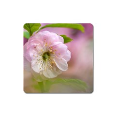 Single Almond Flower Square Magnet