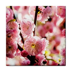 Blooming Almond At Sunset Tile Coasters