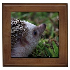 Standard Hedgehog Framed Tile from ArtsNow.com Front