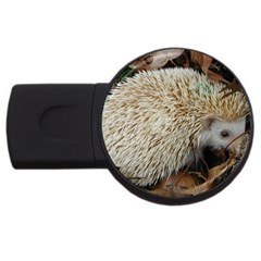 Hedgehog in Leaves USB Flash Drive Round (1 GB) from ArtsNow.com Front