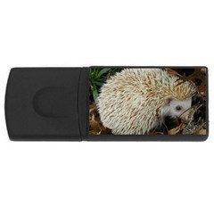 Hedgehog in Leaves USB Flash Drive Rectangular (2 GB) from ArtsNow.com Front
