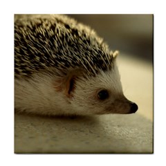 Standard Hedgehog II Tile Coaster from ArtsNow.com Front