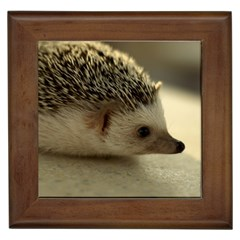 Standard Hedgehog II Framed Tile from ArtsNow.com Front
