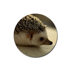 Standard Hedgehog II Rubber Round Coaster (4 pack) from ArtsNow.com Front