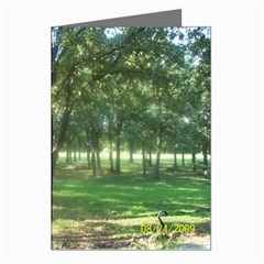 Photo This Greeting Cards (Pkg of 8) by photoThis
